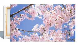 Leinwandbild 80x40cm Motiv: Frühling 2